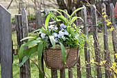 Allium ursinum, Viola cornuta Rocky 'Lavender Blush'