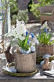 Hyacinthus 'White Pearl' and Muscari