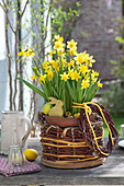 Narcissus 'Tete A Tete' in homemade twigs basket made