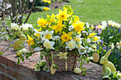 Yellow-white Easter bouquet in the basket, narcissus, helleborus