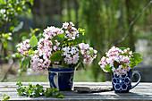 Viburnum carlesii 'Juddii' in blue cups