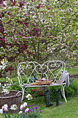 White garden bench in front of Malus (ornamental apple), flower beds with Tulipa (tulip)