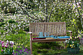 Wooden bench in front of Malus, basket planted with Tulipa, Narcissus