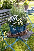 Blue basket with viola cornuta, rosmarinus