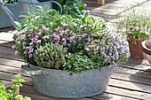 Dianthus 'Pink Kisses', Thymus Vulgaris, Salvia