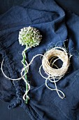 White allium flower wrapped in cord on dark blue fabric