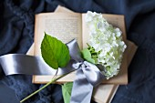 White hydrangea flower with ribbon on open book