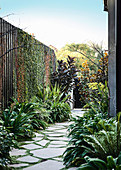 Garden path with stone slabs, surrounded by plants and wooden fence