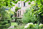 Blick durch Kiwipflanze in üppig grünen Hinterhofgarten