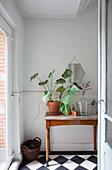 Alter Holztisch mit Pflanze im Terracottatopf auf Schachbrettboden