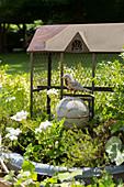 Vintage bird in front of chicken wire cage in garden