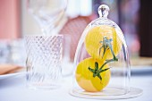 Two yellow tomatoes under glass cover
