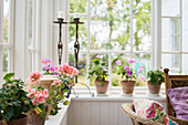 Geraniums and candles on windowsill in conservatory