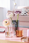Ranunculus in glass vases on coffee table