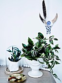 Arrangement with house plants under painted animal skull