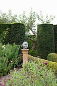 Herbstaster, Stele mit Büste und formgeschnittene Hecke im Garten