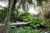 Holzbrücke über Bachlauf im Garten, im Vordergrund Rodgersia