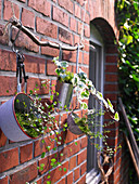 Kitchen utensils holding plants hung from branch on outside house wall