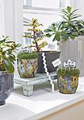 Green plants on a windowsill
