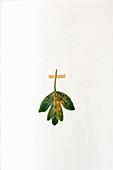Leaf stuck in botanical book