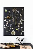 Gepresste Pflanzen und Blüten an schwarzem Fotokarton
