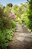 Stone path with steps leading through densely planted summer garden