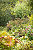 Garden bench amongst autumnal perennials (Les Jardin de Castillon, France)