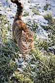 Cat on snowy grass