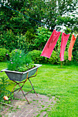 Towels drying on washing line and raised bed made from old trough in garden