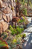 Beet mit Sukkulenten am Weg und an einer Natursteinmauer