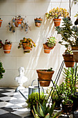 Various succulents in terracotta pots in wall-mounted brackets