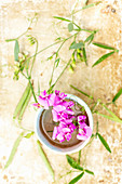 Wickenblüten in einer Keramikschale, daneben Fruchtstände und geschlossene Blüten
