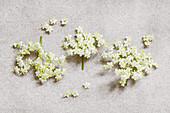 Elder (Sambucus) flowers on stone surface