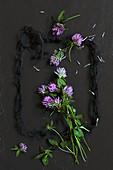 Wiesen-Kleeblüten (Trifolium pratense) mit schwarzem Wollgarn als Rahmen, auf schwarzem Schiefer