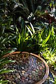 Wasserspiel, umgeben von Pflanzen