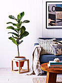 Houseplant in a DIY plant stand next to an upholstered sofa
