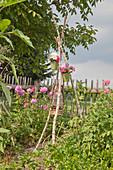 DIY-Blumenstellage mit blühenden Margeriten und Phlox im Garten