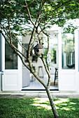 Tree with bird feeder in the garden