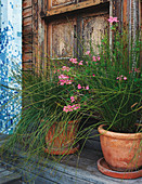 Potted plants outside vintage wooden door