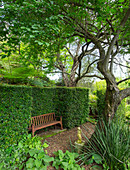 Wooden bench below tree surrounded by clipped hedges