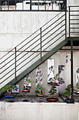 Bonsai trees on shelves under metal staircase in courtyard