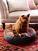 Dog sitting on floor cushion made from pieces of carpet