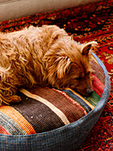 Dog lying on floor cushion made from pieces of carpet