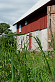 Grass in front of farmhouse with red wooden façade