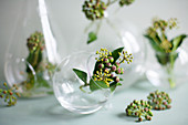 Ivy berries in spherical glass vases on grey surface