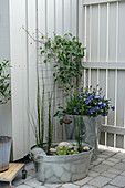 Miniature pond in zinc tub and zinc bucket used as planter