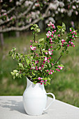 Branches of fruit blossom in white jug