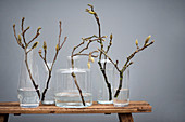 Branches of leaf buds in various glass vases on wooden bench
