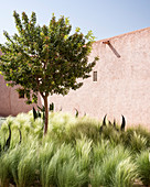 Baum zwischen Gräsern und Agaven im Hof zwischen Lehmhäusern