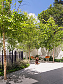 Inner courtyard with trees, designer outdoor furniture and a dog